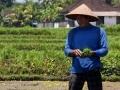 Political, Economic & Social Developments in Indonesia: February 2021 Report