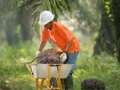 Government Supports Palm Oil Industry by Temporarily Removing Palm Oil Export Levy