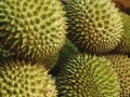 "Tropical Fruits of Indonesia: Durian, the ""King of Fruits"""