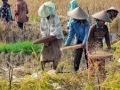 Political, Economic & Social Developments in Indonesia: January 2021 Report