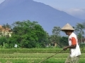 Update on the COVID-19 Pandemic in Indonesia; Lessons to Be Learned from Developments Abroad?