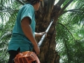 Rainforest Action Network: Workers Exploited at Indonesia's Palm Oil Estates