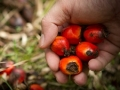 Crude Palm Oil Exports Indonesia fell and Rose in 2016