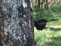 Commodity Watch Indonesia: Natural Rubber in Demand as Oil Rises