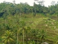 Draft Bill Proposes to Limit Foreign Ownership of Plantations in Indonesia
