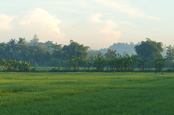 Rice in Indonesia: Irrigation, Sawah Size & Seeds Need Improvement